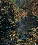 Ruiny młyna wodnego w Polance Horynieckiej