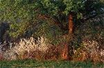 Urokliwy wiosenny zakątek na polach Obroczy