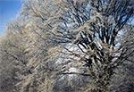 Zimowe drzewo na Roztoczu Zachodnim