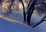 W fosie zamojskiej twierdzy - tego drzewa już od dawna nie ma