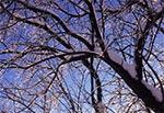Oblodzone drzewo na polach wsi Sochu - południowy stok Bukowej Góry