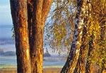 Szpaler drzew rosnących wzdłuż polnej drogi, a tam w dole dolina rzeki Wieprz w rejonie wsi Bondyrz