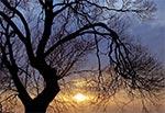 Zimowy portret drzewa - łąki między Topornicą a Lipskiem