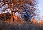 Listopadowa trześnia w promieniach zachodzącego słońca - za chwilę zrobi się zimno i ciemno