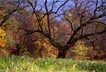 Jesteśmy w parku pałacowym w Michalowie. Brakuje na Roztoczu takich starych, malowniczych drzew, co bardzo zubaża pejzaż roztoczański oraz środowisko przyrodnicze - bo brakuje dziupli dla ptaków,  wiewiórek i innych pociesznych stworków.