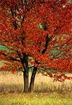 Jesień na Roztoczu Środkowym - pola wsi Suchowola