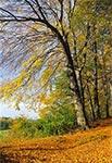 Na skraju Roztoczańskiego Parku Narodowego w rejonie wsi Kosobudy