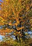 Jesień na Działach Grabowieckich