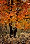 W barwach jesieni - okolice Suchowoli