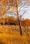 Taka jesień nie przygnębia - taka ilość żółcieni może tylko rozweselać ;)