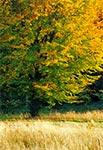 W Krasnobrodzkim Parku Krajobrazowym jesienią