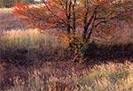 Na Działach Grabowieckich jest niewiele takich dzikich, malowniczych zakątków, gdyż jest to teren nadmiernie rolniczy. To miejsce należy do wyjątków z tego tylko powodu, że ma postać sporego zagłębienia o stromych zboczach, gdzie prace rolne byłyby niemożliwe