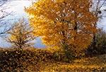 Jesienią nawet w banalnych miejscach jest bajecznie - tu akurat widzimy miejsce tuż przy lotnisku w Mokrem