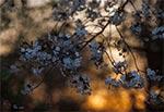Wiosenny zmierzch