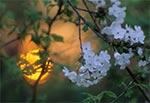 Wiosenny zachód słońca na Roztoczu Zachodnim - okolice Kawęczynka