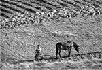 Zdjęcie archiwalne z czasów kiedy tak jeszcze orano pola na Roztoczu