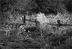 Szadzie w dolinie Wieprza