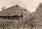 Rozsypująca się stodoła kryta strzechą
