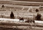 """Wciąż dosyć częsty widok na Roztoczu - tutaj akurat rejon """"Łysych Byków"""""""
