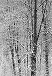 Rezerwat Czerkies w RPN