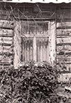 Okno opuszczonego domostwa w okolicy miejscowości Goraj na Roztoczu Zachodnim