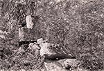 Krzyż w okolicy nieistniejącej wsi Chemiele - Roztocze Wschodnie/Południowe