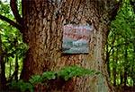 Taka tabliczka wisi na pokaźnym drzewie niedaleko granicy w okolicy wsi Prusie - zaskakujące, że nie znał jej napotkany pogranicznik