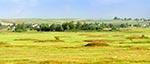 Cmentarzysko kurhanowe między wsiami Mokre a Hubale - ciekawie kurhany prezentują się kiedy kwitną na nich wrzosy