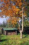 Niewielki trawnik w strefie wypoczynkowej rozdziela sad z warzywnikiem od lasu. Drewno oczywiście pocięte piłą ręczną.