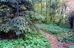 W naszym lesie jest o niebo większa bioróżnorodność niż w najściślejszym rezerwacie - te rośliny zostały przywiezione onegdaj. Tu kiedyś była pusta najzwyklejsza łąka.