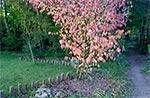 Koślawe podpróchniałe obwiedzenie trawnika sosnowymi kołkami, współgra z naturalnością otoczenia. Naszym zdaniem ogród powinien być jak najbardziej podobny do natury - kształtowany ale tak aby nie było to nachalne.