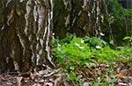 Po 20 latach mamy młody las - na miejscu łąki