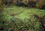 Niewielkie bagienko w rejonie Podemszczyzny - przy cmentarzu