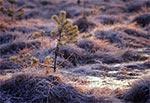 Rezerwat Obary o świcie
