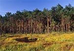 Rezerwat Międzyrzeki w RPN