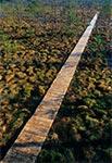 Rezerwat florystyczno-torfowiskowy Obary koło Biłgoraja