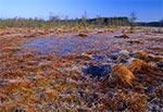 Bagno Obary koło Biłgoraja