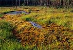 Rezerwat Międzyrzeki w RPN - łany rosiczek