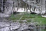 Wiecznie zielone źródła Raty