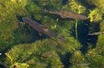 Źródła rzeki Branew