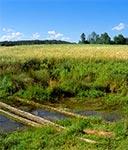 Źródło Sopotu w Husinach