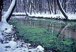 Źródła Raty - jedyne na Roztoczu miejsce gdzie jest zielono przez całą zimę