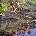 Źródło w nieistniejącej wsi Zawałyla, koło Werchraty. A dokładnie to było źródło, zanim bobry wybudowały tamę nieopodal i zatopiły bezcenne ujęcie czystej, orzeźwiającej wody źródlanej. Na dole widzimy zarys kamiennego obramowania