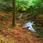 Źródła potoku Różaniec to jedno z najbardziej fascynujących miejsc na Roztoczu. Jest to też miejsce niezadeptane,  dzięki temu, że nie można tu podjechać samochodem więc dotrą tu jedynie ludzie chętni aby dokonać pewnego wysiłku