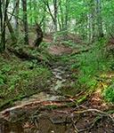 Żródła potoku Różaniec - fascynujące i wciąż niezadeptane miejsce