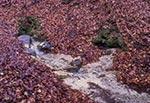 Główne źródła puszczańskiego potoku Różaniec. Ta woda zapewne należy do najczystszych na Roztoczu, bo źródlisko otaczają zewsząd lasy