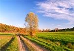 Droga na Roztoczu Zachodnim - okolice wsi Chłopków