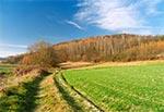 Jesienna droga roztoczańska - między Hosznią Ordynacką a Chłopkowem