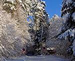 Zimą ta droga należy do najbardziej urokliwych na całym Roztoczu - wiedzie pod Bukową Górą ze Stawów Echo do wsi Sochy  (Max. wielkość obrazu - 45 mln.pix).