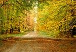 Droga z Krasnobrodu do Hutek